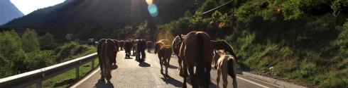caballos pirenáincos