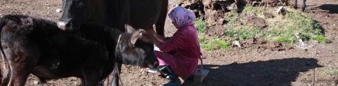 8111_kirguís munyir
