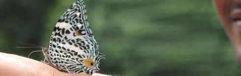 5600_mariposas