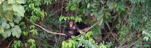 6191_baboon island